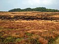 Moorland and forest from the summit of the Ayr to Newton Stewart road - geograph.org.uk - 334220.jpg