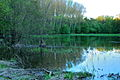 Morava's flooded forest 01.jpg