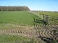 Mordon Wood - geograph.org.uk - 391217.jpg