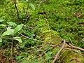 Moss on a Log (7819964146).jpg