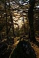 Mount Ainos forest.jpg