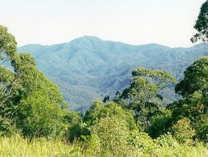 Wilson River (New South Wales) - Image: Mount Banda Banda seen from Number 1 fire tower
