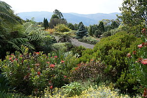 Mount Tomah, New South Wales - Blue Mountains Botanic Garden at Mount Tomah
