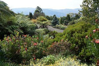Blue Mountains Botanic Garden - Proteaceae garden, Blue Mountains Botanic Garden
