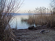 Murtensee Ufer