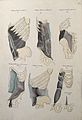 Muscles of the diaphragm; six figures. Pen and ink drawing w Wellcome V0008202EL.jpg