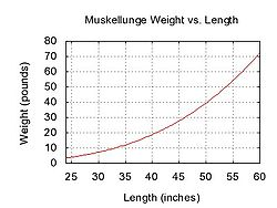 Muskellunge weight length graph.jpg