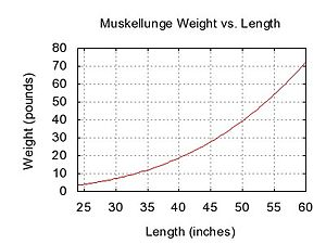 Muskellunge - Graph showing weight-length relationship for muskellunge