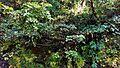 Mussoorie road34.jpg