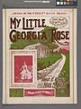 My little Georgia rose (NYPL Hades-609773-1256462).jpg