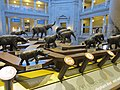 National Museum of Natural History, Washington, D.C. (2013) - 13.JPG