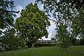 Naturdenkmal Linden am Sedanplatz, Kennung 82350290001, Gechingen-Bergwald 07.jpg