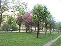 Nature in Smolensk - 60.jpg