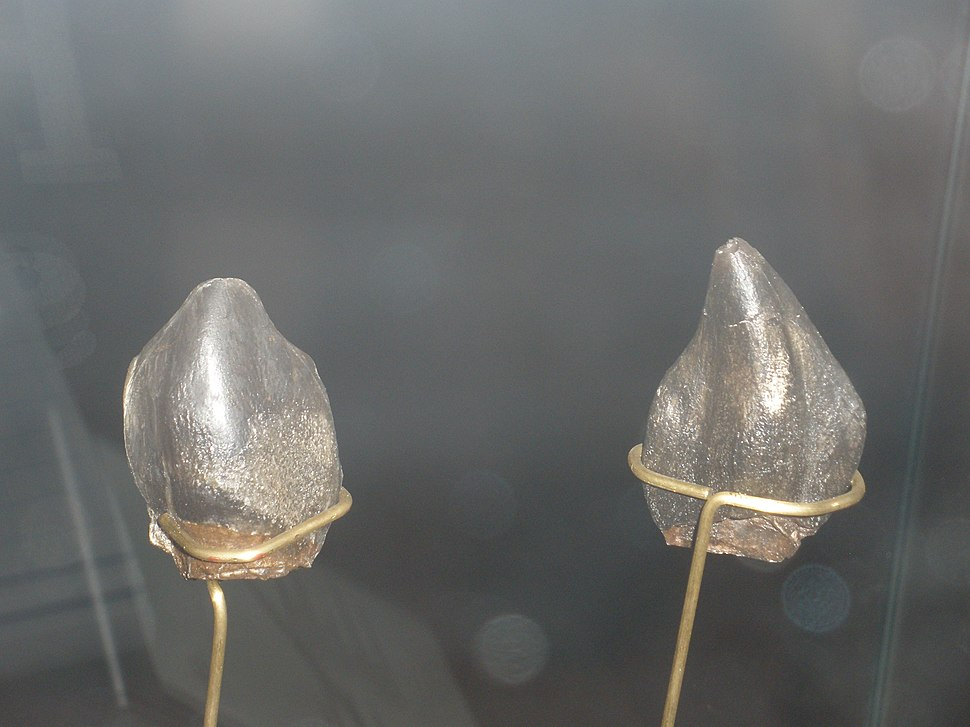 Neosodon teeth
