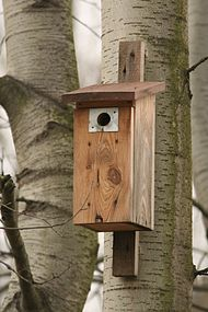 Bygga fågelholk