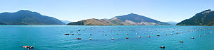 Marlborough Region - Green-lipped mussel farm beside Havelock