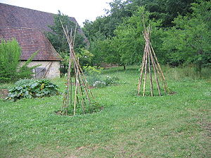 English: Beanpoles at the Freilichtmuseum Neuh...