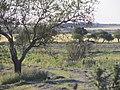 Nogoyá, Entre Ríos, Argentina - panoramio (119).jpg