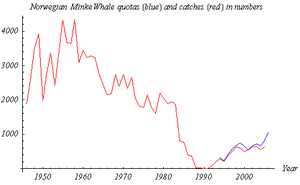 Norwegian Minke Whale Quotas (blue line, 1994-2006) and Catches (red line, 1946-2005) in numbers (from official Norwegian statistics)
