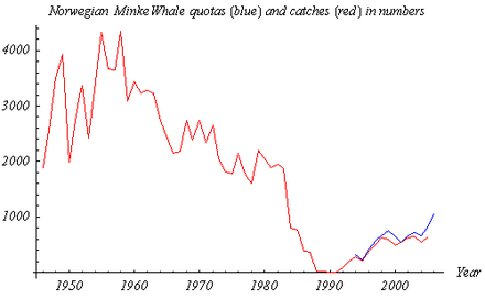 Norwegian catches (1946-2005) in red and quotas (1994-2006) in blue of Minke Whale, from Norwegian official statistics NorwegianWhaleCatches.png
