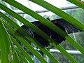 Ocean Park butterflies 4.jpg