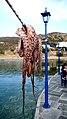 Octopus (2538681299).jpg