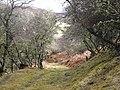 Old track, Little Rogart - geograph.org.uk - 712779.jpg