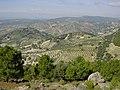 Olivares en Jaén.jpg