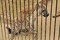 Omiya park zoo 006.jpg