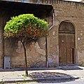 Orangenbaum (106370107).jpeg