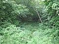 Oranienbaum Sady2012 4635.jpg