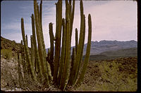 Organ Pipe Cactus National Monument ORPI2070.jpg