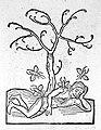 Ortus sanitatis Wellcome L0017841.jpg