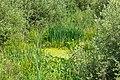 """Osterholz-Scharmbeck, Naturschutzgebiet """"Breites Wasser"""" -- 2018 -- 3011.jpg"""
