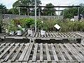 Outdoor plants (6167180163).jpg