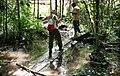 Overbridge rain forest (2720232480).jpg