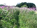 Overgrown footpath - geograph.org.uk - 2004914.jpg