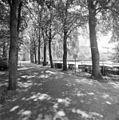 Overzicht toegangslaan met beuken - Helmond - 20002991 - RCE.jpg