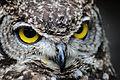 Owls @ Dragonheart, Enschede (9549446722).jpg