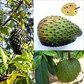 Owoce Guanabana.jpg