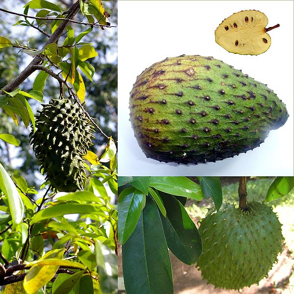 File:Owoce Guanabana.jpg