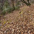 Pörtschach Winklern Waldweg Kalkseilbahn Rampe 20012020 8088.jpg