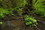Přírodní rezervace Kavinský potok (15).jpg