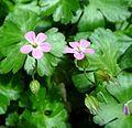 P1190229 - Flickr - gailhampshire.jpg