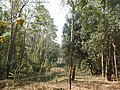 P7 Lawachara National Park, In Moulovibajar, Bangladesh.jpg