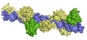 3d structure of PAX-5 + ETS-1 (yellow + green)...
