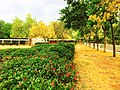 PU greenery.jpg