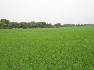 Vennaaru River - Image: Paddy Fields around Vennaaru River