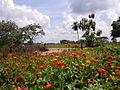Paisaje de flores, El Real. Estado Barinas. Venezuela..jpg