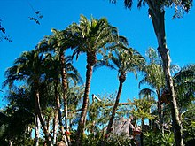 Palm trees01.jpg